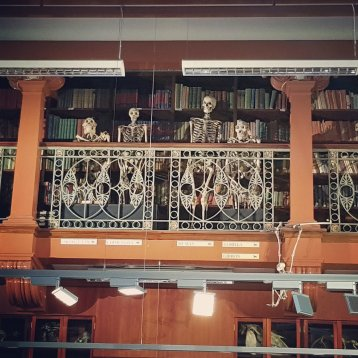 Inside the Museum of Zoology, looking up at the balcony with the skeletons. There are 5 in total including a human, an orangutan, a gorilla, a gibbon, & I believe a chimpanzee.