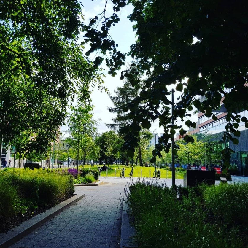 A path between two trees, framing a grassy space in central Manchester.